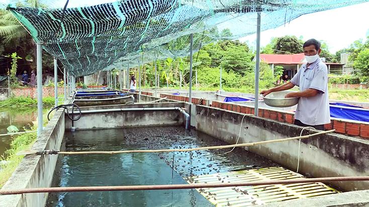 Nông dân Quảng Trạch: Ứng dụng khoa học kỹ thuật vào sản xuất