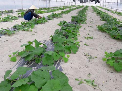 Nông nghiệp công nghệ cao ở Quảng Bình: Tín hiệu vui từ mô hình điểm ở huyện Lệ Thủy