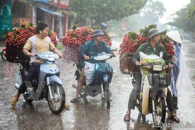 Nông sản Việt trước hội nhập: Tái cơ cấu, hướng tới xuất khẩu