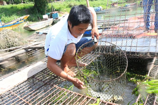 Nuôi cá lồng trên sông Son: Một hướng phát triển kinh tế
