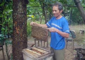 Ong rừng Minh Hóa lên ngôi
