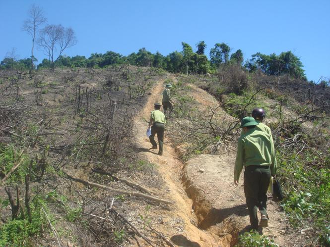 Phát hiện 950 vụ vi phạm trong lĩnh vực quản lý bảo vệ rừng