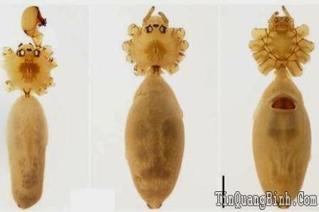 Phát hiện ba loài nhện mới ở Phong Nha - Kẻ Bàng