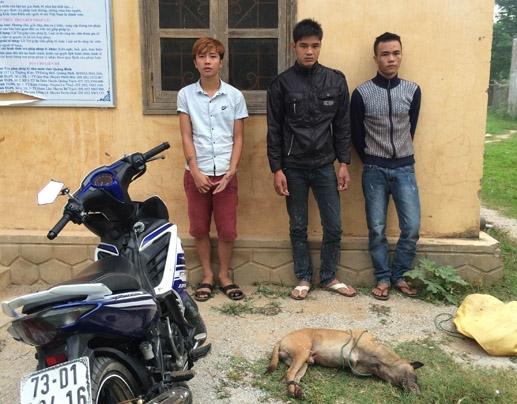 Phát hiện và bắt giữ 3 đối tượng trộm chó