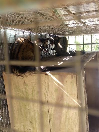 Phát hiện vụ vận chuyển động vật hoang dã với số lượng lớn