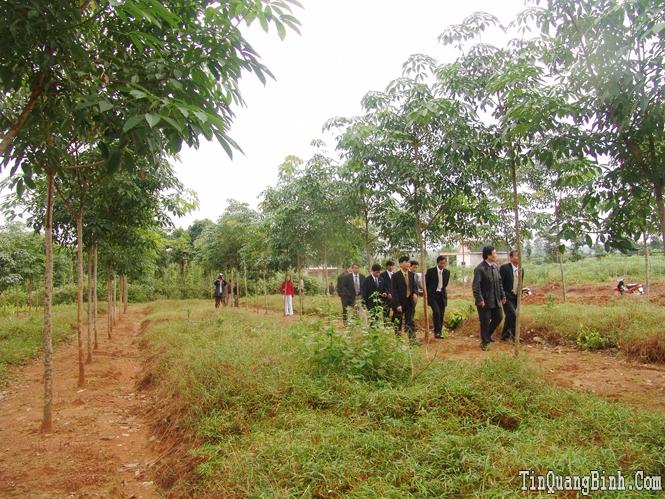Phát huy sức mạnh tổng hợp, tập trung phát triển nền nông nghiệp tỉnh nhà theo hướng gia tăng giá trị bền vững