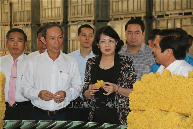 Phó Chủ tịch nước Đặng Thị Ngọc Thịnh làm việc tại Tổng Công ty Cao su Đồng Nai