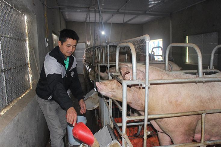 Phòng, chống dịch bệnh ở động vật trên cạn: Chủ động, chặt chẽ, quyết liệt