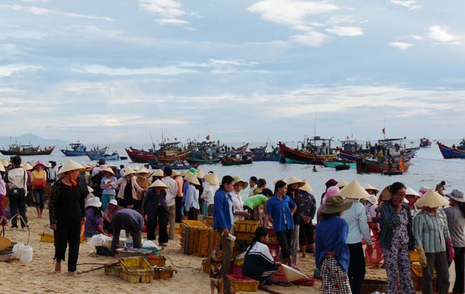 Phóng sự ảnh: Cá về trên bãi biển Nhân Trạch