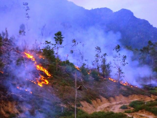 Quảng Bình: Cháy lớn thiêu rụi 20 ha rừng