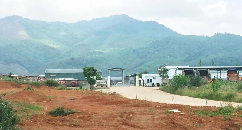 Quảng Bình: Dự án chăn nuôi bò thịt quy mô lớn xem nhẹ vấn đề môi trường, tiếp tục gây ô nhiễm