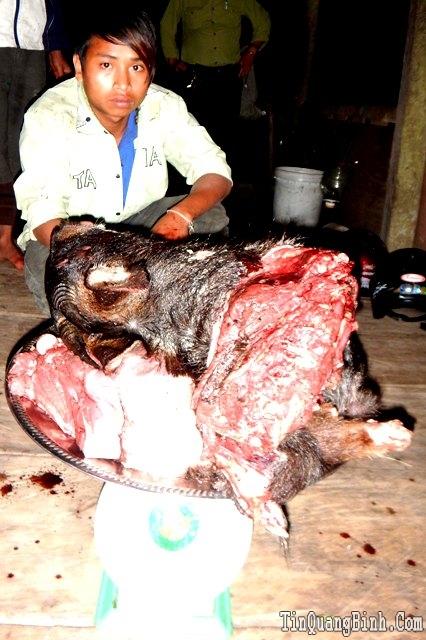 Quảng Bình: Khởi tố vụ xẻ thịt, vận chuyển trái phép Sơn Dương