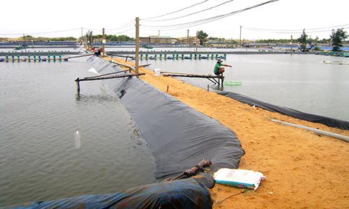 Quảng Bình: Lao đao nuôi tôm trên cát
