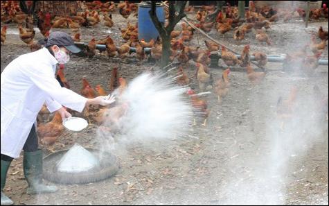 Quảng Bình tăng cường công tác phòng chống dịch cúm gia cầm H5N6