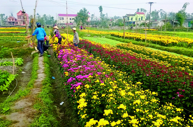 Quảng Long: Khởi sắc từ chuyển đổi cơ cấu cây trồng