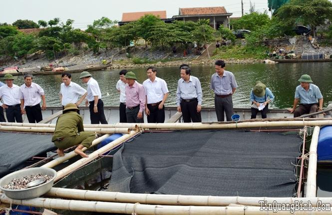 Quảng Ninh: Chú trọng phát triển đánh bắt và nuôi trồng thủy sản