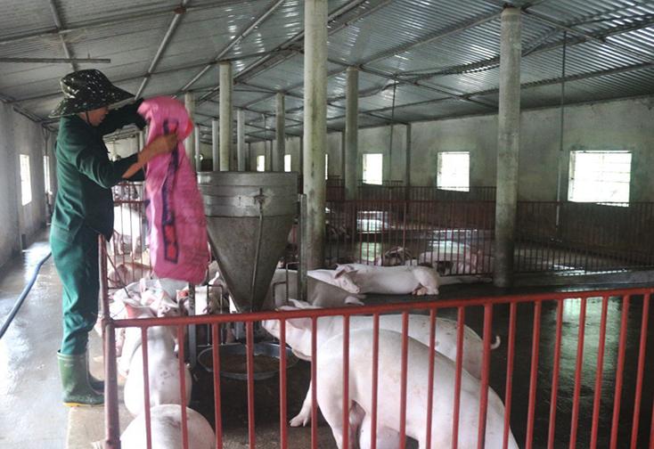 Quảng Ninh: Khẩn trương phòng, chống dịch tả lợn châu Phi