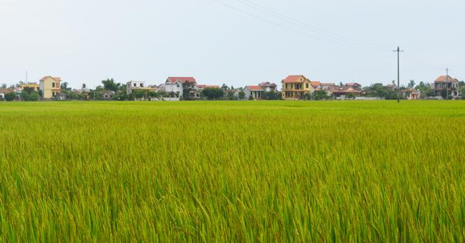 Quảng Ninh: Tập trung đẩy mạnh công tác đồn điền đổi thửa