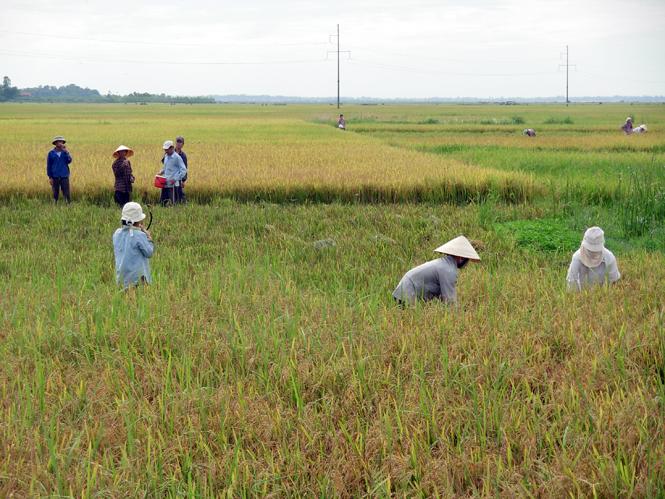 Quảng Ninh: Thêm một vụ mùa thắng lợi toàn diện