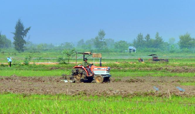Quảng Ninh: Tích cực triển khai sản xuất vụ đông-xuân 2015-2016