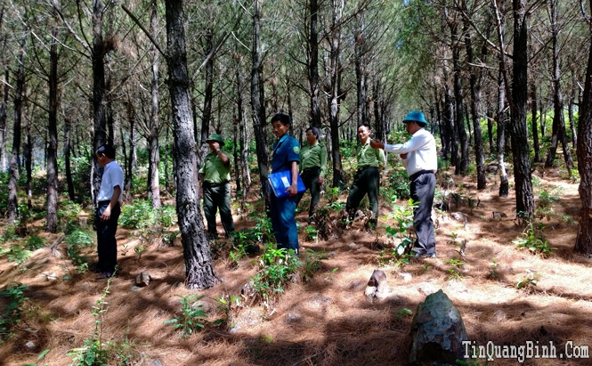 Quảng Ninh: Xử lý 53 vụ vi phạm lâm luật, thu giữ trên 108m3 gỗ các loại