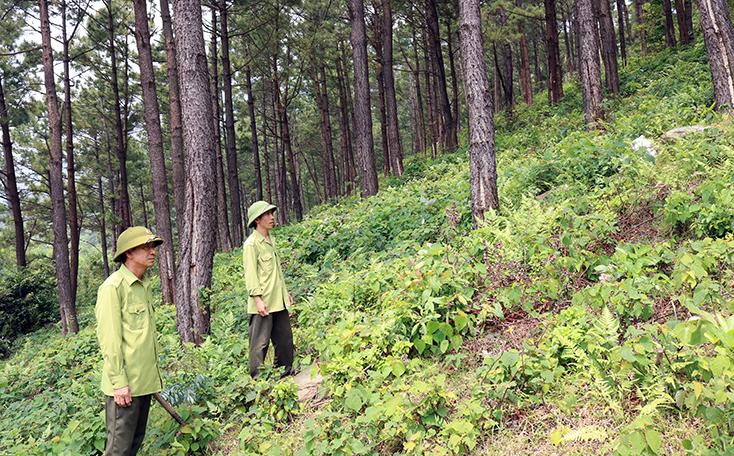 Quảng Trạch: Căng mình phòng chống cháy rừng