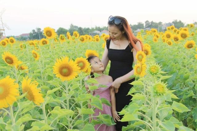 Quảng Trạch: Cánh đồng hoa hướng dương nở trái mùa tuyệt đẹp thu hút du khách