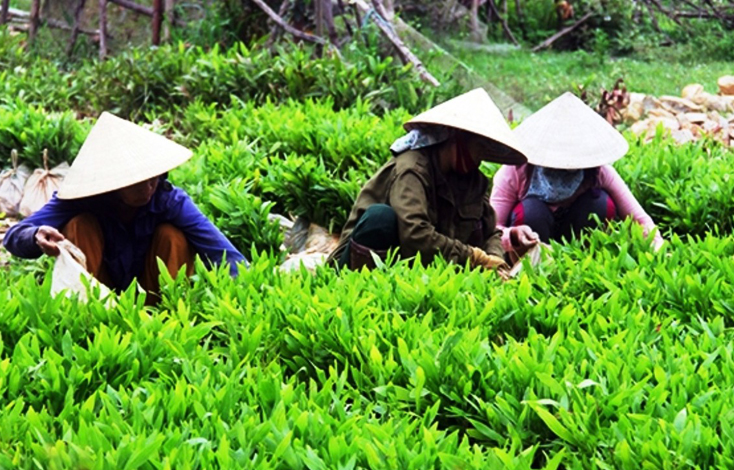 Quảng Trạch: Tăng cường quản lý chất lượng giống cây trồng lâm nghiệp