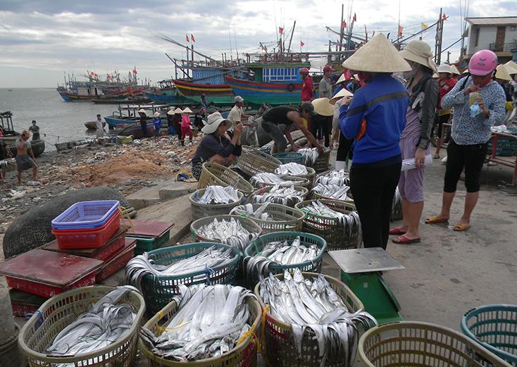 Quảng Trạch: Trên 1.240 tàu cá tham gia khai thác hải sản