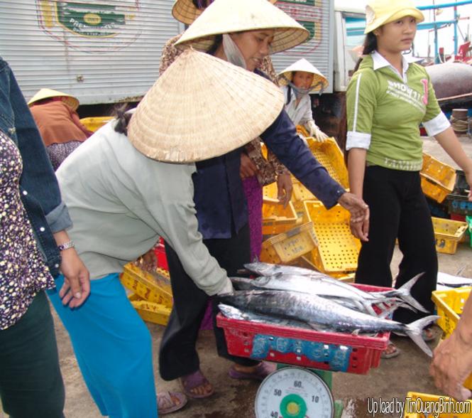 Quý 1-2015, sản lượng đánh bắt thuỷ sản tăng 8,4%