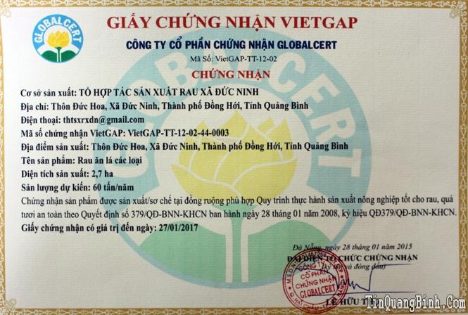 Rau sạch theo tiêu chuẩn VietGap: Hành trình từ nhà ra chợ