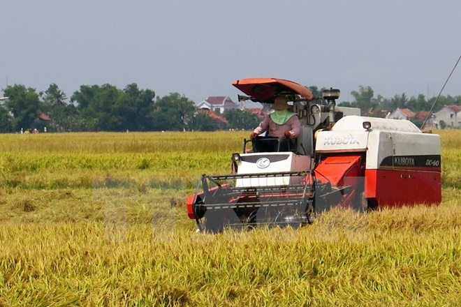 Sản lượng lúa của cả nước năm nay ước đạt hơn 45 triệu tấn