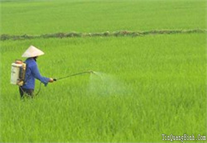 Sâu bệnh và chuột hại lúa xuất hiện trên diện rộng