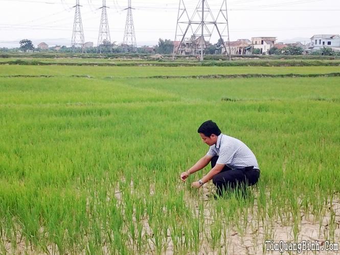 Tăng cường các giải pháp bảo vệ lúa vụ hè-thu