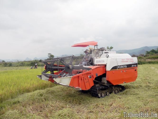 Tập trung phát triển nông nghiệp theo hướng nâng cao giá trị gia tăng và bền vững