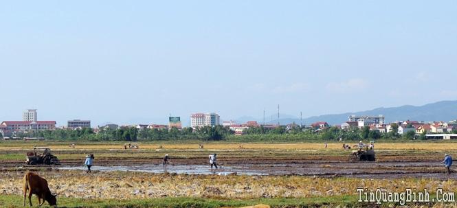Thành phố Đồng Hới: Gấp rút hoàn thành gieo trồng vụ hè-thu