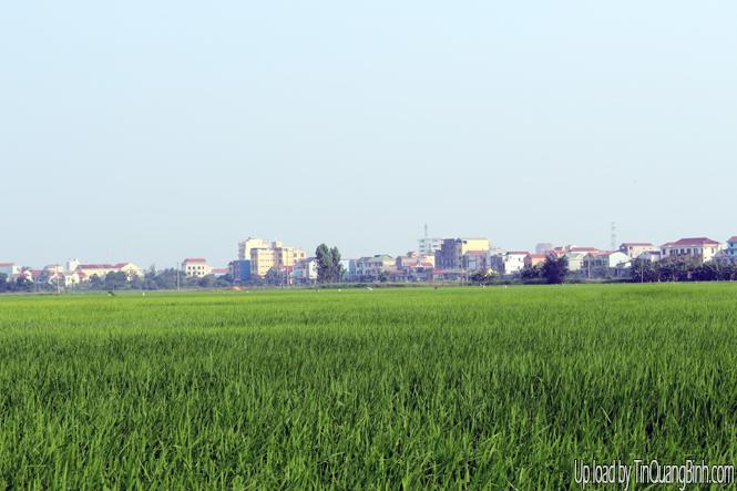Thành phố Đồng Hới: Sản xuất đông-xuân nhiều thuận lợi