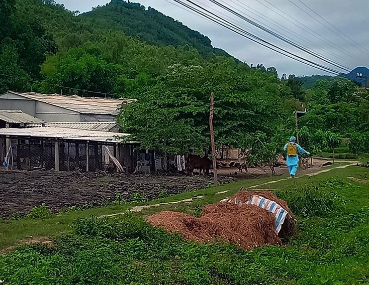 Thị xã Ba Đồn công bố hết dịch tả lợn châu Phi