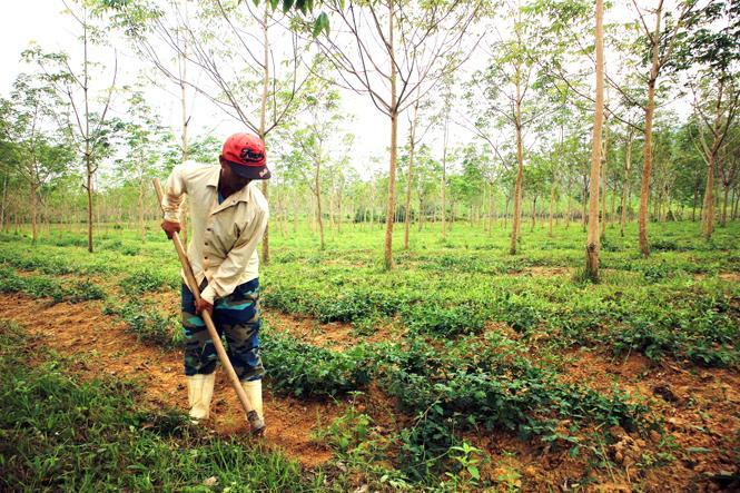 Thu hút doanh nghiệp đầu tư vào nông nghiệp, nông thôn