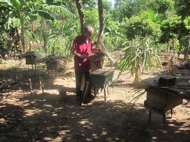 Thu nhập khá từ nghề nuôi ong lấy mậtMô hình nuôi ong lấy mật của ông Nguyễn Quyết Thắng.