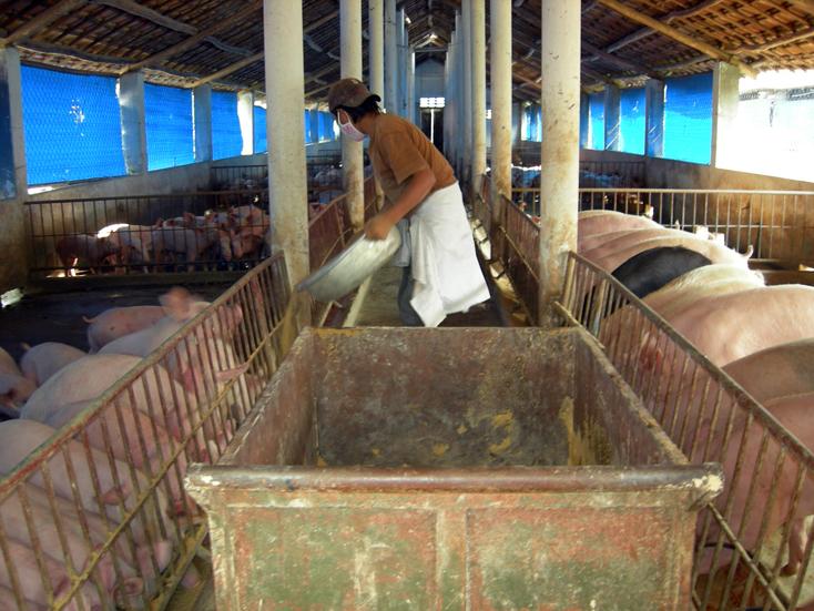 TP. Đồng Hới: Chủ động phòng, chống dịch bệnh động vật trên cạn