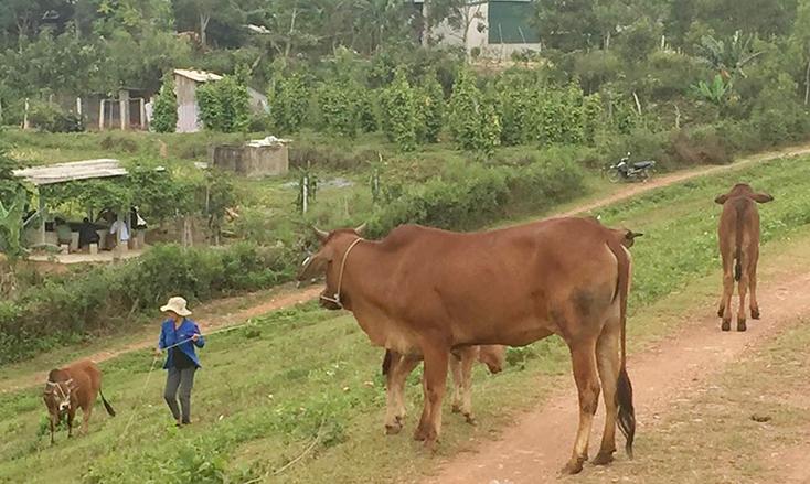 Triển khai quyết liệt, đồng bộ các giải pháp phòng, chống dịch bệnh gia súc, gia cầm vụ đông-xuân