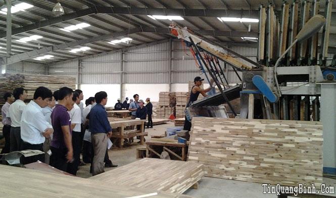 Trình diễn kỹ thuật mô hình sản xuất gỗ ván ghép thanh