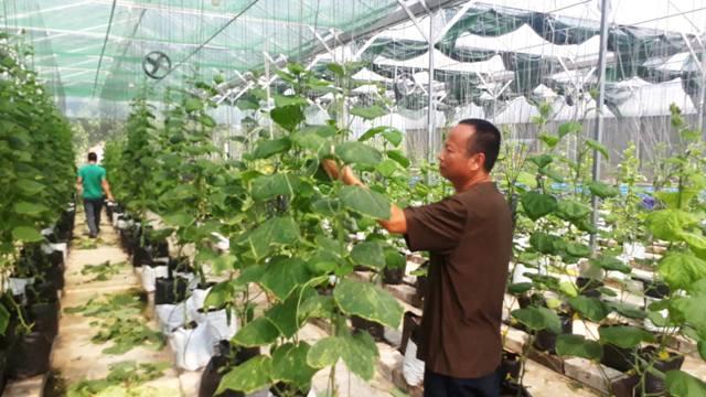Trồng rau thủy canh vùng gió Lào, nắng rát thu 1 triệu/m2