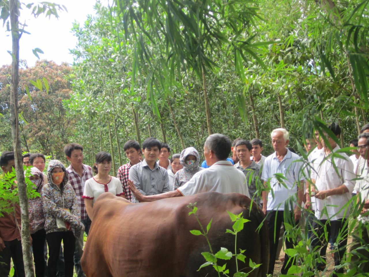 TTKNQG: Tập huấn nhân rộng mô hình vỗ béo bò thịt trong nông hộ tại thị trấn Quy Đạt huyện Minh Hóa tỉnh Quảng Bình
