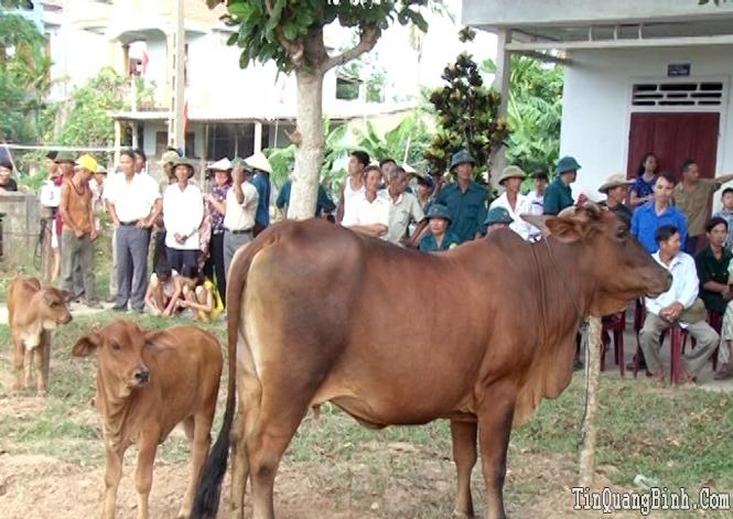 Tuyên Hóa: Chuyển biến tích cực sau 4 năm thực hiện đề án phát triển chăn nuôi