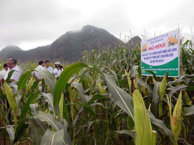 Tuyên Hóa: Tái cơ cấu ngành Nông nghiệp theo hướng nâng cao giá trị gia tăng và phát triển bền vững