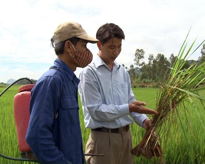 Tuyên Hóa: Tích cực phòng chống sâu bệnh hại cây trồng vụ hè-thu
