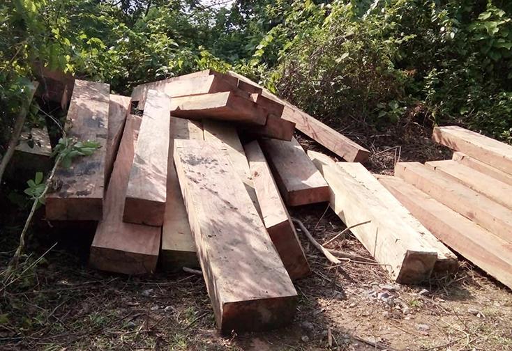 Về vụ phá rừng ở huyện Quảng Ninh: Sẽ xử lý nghiêm các tập thể, cá nhân có sai phạm