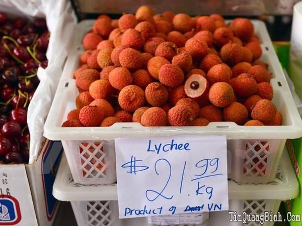 Việt Nam xuất khẩu hàng chục tấn vải quả đầu tiên sang Australia